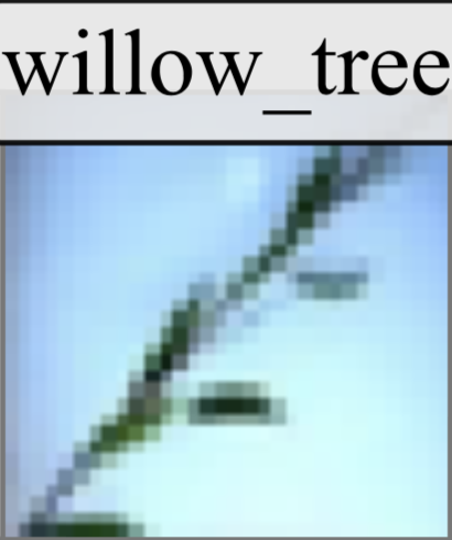Mislabeled CIFAR100 Sample: Willow Tree